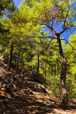 samaria: Samaria Gorge, island of Crete, Greece