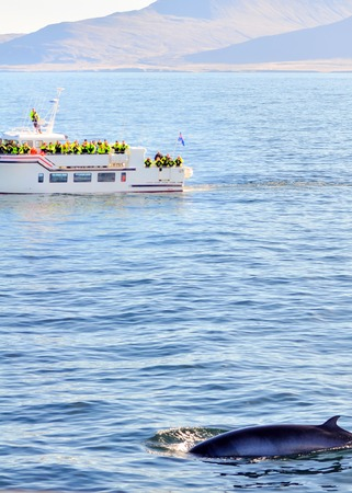 whale watching: Whale watching in Iceland