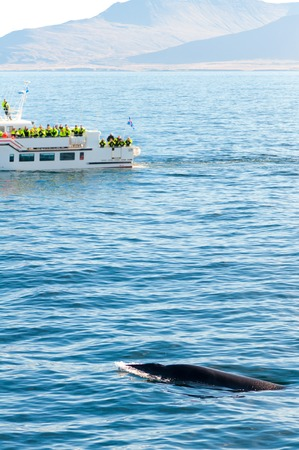 whaling: Whale watching Iceland