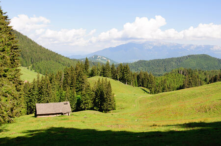 Old wood shack in Carpathians, with pine trees around photo