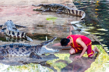 Nakhon Pathom, Thailand - May 24, 2014: Crocodile show at Samphran Crocodile Farm on May 24, 2014 in Nakhon Pathom,Thailand. The farm of more than 10,000 crocodiles is acclaimed to have one of the cleanest and most impressive public crocodile displays in