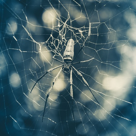 golden orb weaver: Large tropical spider in the web Stock Photo