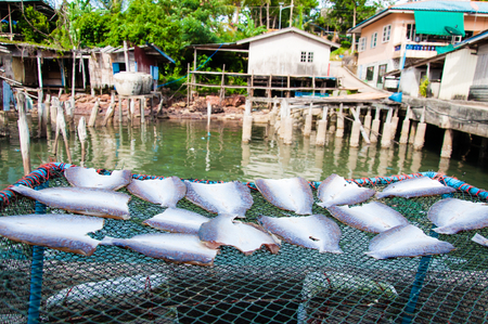 Fish drying in the sun, food background photo