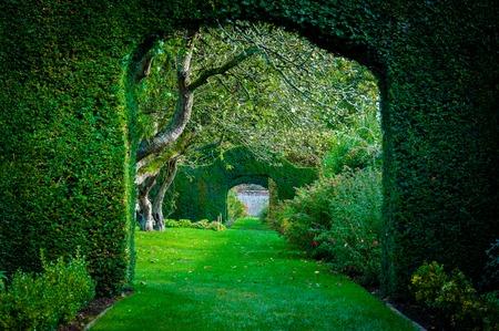 イギリスの田舎の庭で緑の植物のアーチ