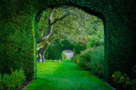 Green plant arches in english countryside garden