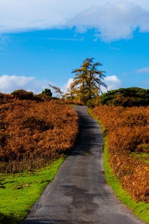 yorkshire dales: Verde Paisaje de campo en el Parque Nacional de Yorkshire Dales, Reino Unido