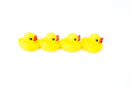 copy paste: Four yellow rubber ducks in a line isolated on white background, available copy paste