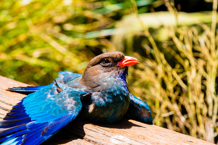 feathered: Blue feathered bird looking towards the sky Stock Photo