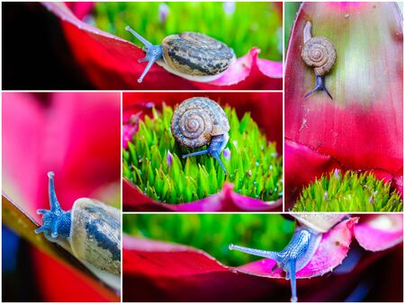 Photo collage of Macro shot of a snail on an colorful exotic plant Foto de archivo