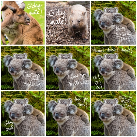 Photo collage of Australian koala bear native animal with baby and various greetings Stock Photo