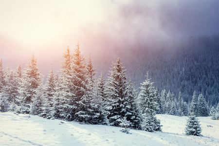 Mysterious winter landscape majestic mountains in winter. Magical winter snow covered tree. Europe. Happy New Year! In anticipation of the holidays! Stock Photo