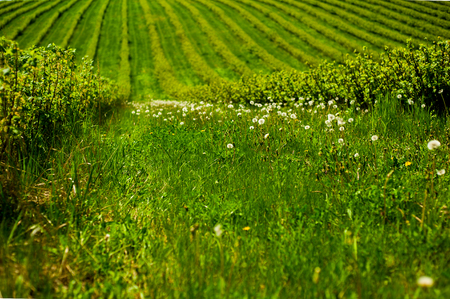 green field with bushes Stock Photo