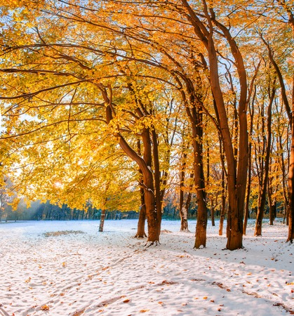 wildwood: forest with first winter snow