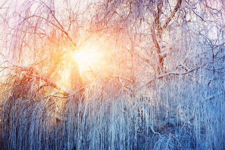 sun peeps through the winter willow