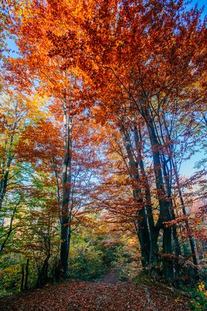 autumn park beautiful yellow tree
