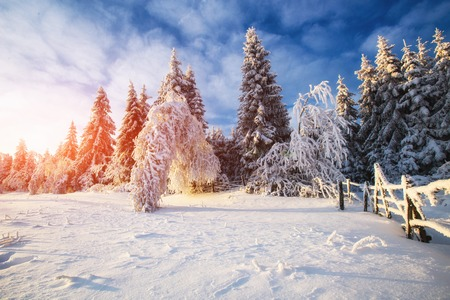 winter landscape trees in snow Stock Photo