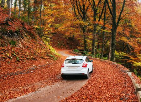 forest path: car on a forest path Stock Photo