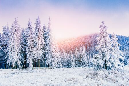 마법의 겨울 눈이 덮여 나무