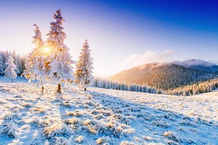 맑은 겨울 풍경 스톡 콘텐츠