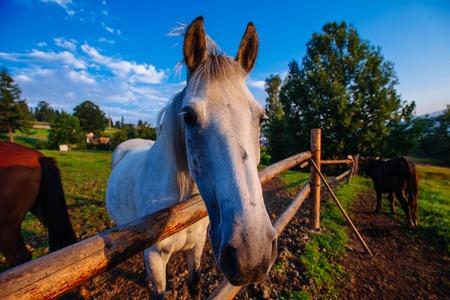 Funny horse close up