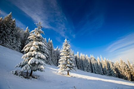 christmas grounds: snow capped mountains