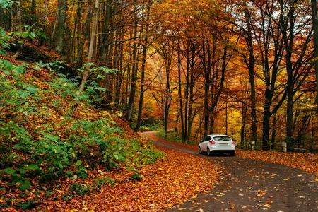 car on a forest path Standard-Bild