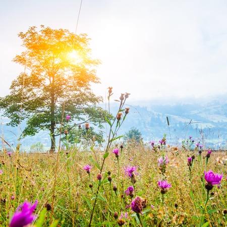 산속의 풀밭