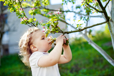child at the blossom trees Stock Photo