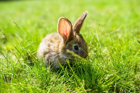 rabbit on the grass Imagens