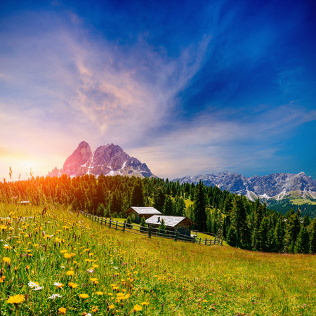 bloomy: flower meadow in the Alps Stock Photo