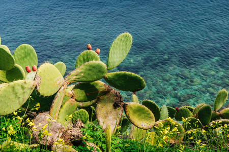 salina: Mature couple Barbed cactus and fruit against water