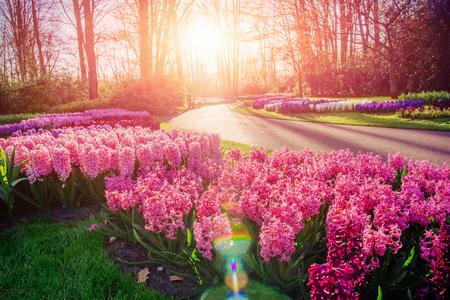 flowerbeds: Flower flowerbeds in the park.