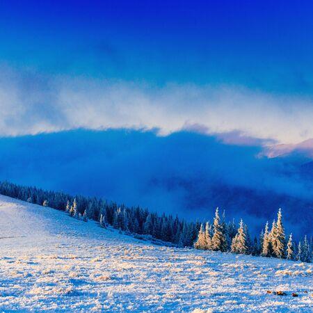 winter landscape trees in frost. Carpathians Ukraine Europe