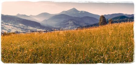 grass field in the mountains - Vintage effect
