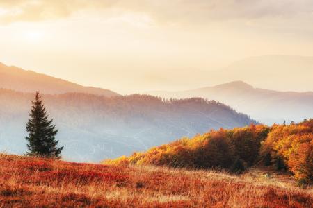 秋の季節、晴れた日の午後に白樺の森
