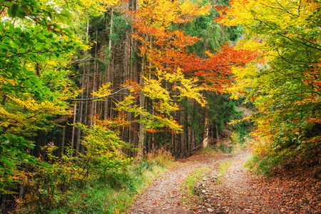 Forest Road in the autumn.  Landscape Stock Photo