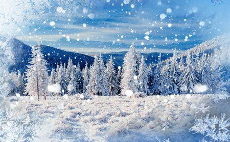 Magischen Winter Schnee bedeckt Baum, Hintergrund mit einigen weichen hohen Standard-Bild - 71580634