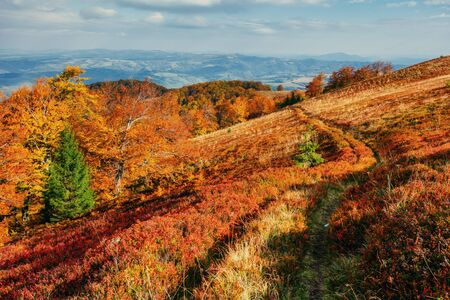 Autumn trail leading into the mountains and evergreen tree. Stock Photo
