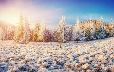 Winter landscape glowing by sunlight. Dramatic wintry scene