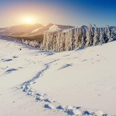 trampled: Fantastic winter landscape and trampled paths at sunset that lea
