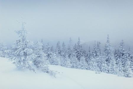 프 로스트와 안개에 겨울 풍경 나무 스톡 콘텐츠