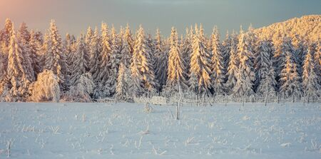 Winter landscape glowing by sunlight. Carpathian, Ukraine, Europe.