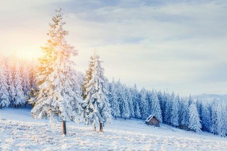 wintersport: cabin in the mountains in winter. Carpathian, Ukraine, Europe Stock Photo