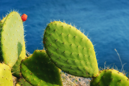 big beautiful cactus on the background of the sea. Stock Photo
