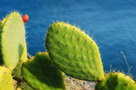 saguaro: big beautiful cactus on the background of the sea. Stock Photo