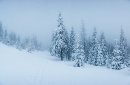 winter landscape trees in frost and fog. Banque d'images