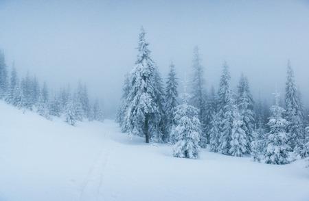 winter landscape trees in frost and fog. Standard-Bild