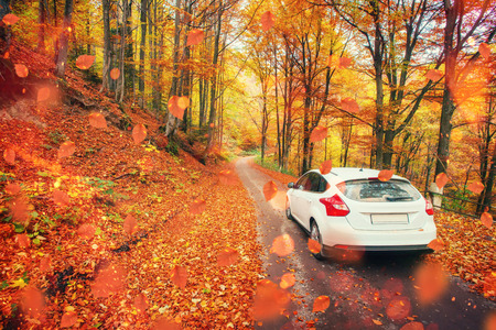 forest path: car on a forest path. Beautiful road in mountains. Carpathian Stock Photo