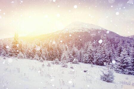 magical winter landscape, background with some soft highlights Reklamní fotografie