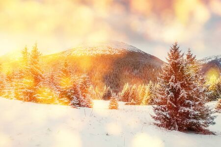 magical winter landscape, background with some soft highlight Stock Photo